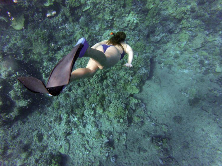 Hay otro mundo bajo el mar (pixabay)
