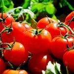 Cómete un tomate al día, tu salud será envidiable