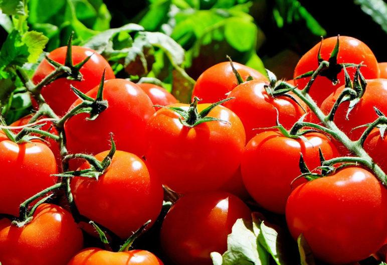 Tomate (Pixabay)