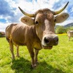 La OCU descubre cuál es la mejor leche semidesnatada del mercado