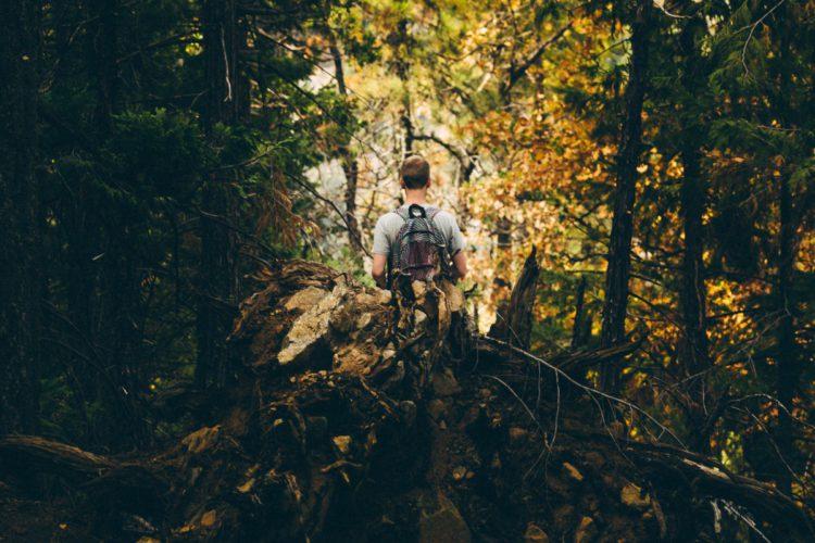 Súbete a los árboles y disfruta de las vistas (pixabay)